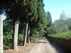 Walking Tuscany's White Roads